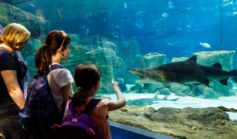 monterey bay aquarium-travelistia