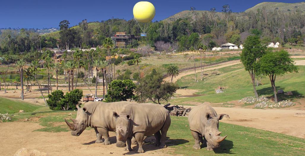 Best Travel spots San Diego Zoo:
