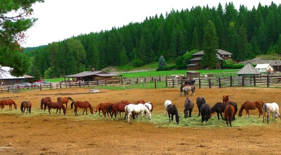Visit Bar W Guest Ranch in your summer holidays