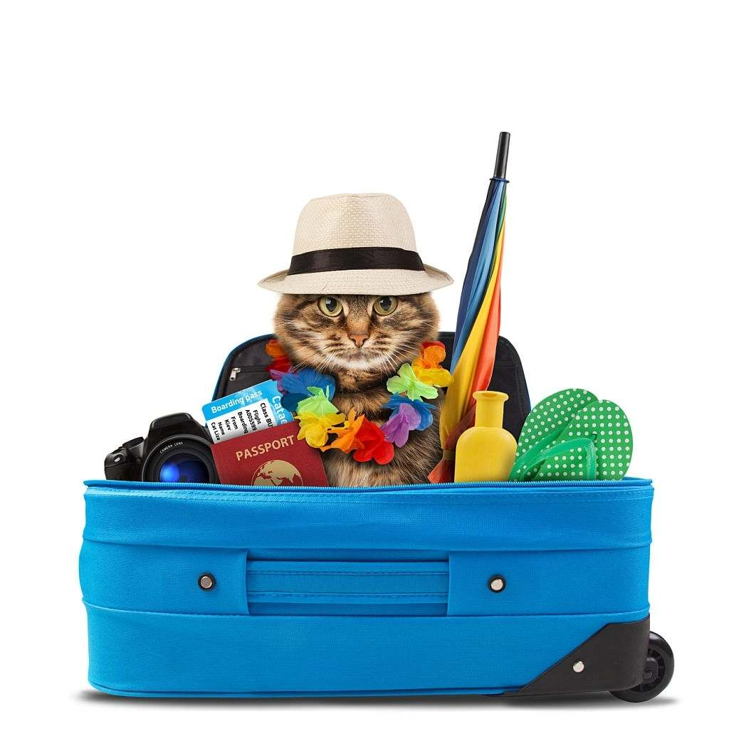 How to Travel with Cats